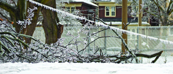 Ice on downed power lines admist fallen branches